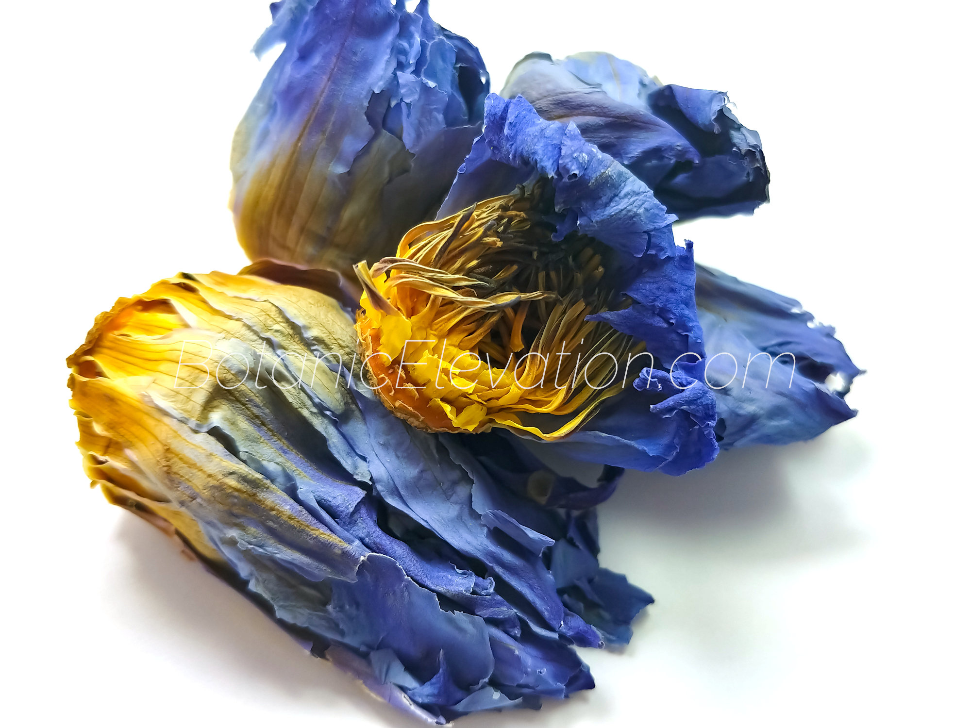 Blue Lotus Flowers 1