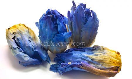 Blue Lotus Flowers 2