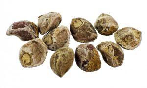 Hawaiian Baby Woodrose Seeds (HBWR) (Argyreia Nervosa)
