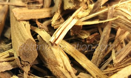 Banisteriopsis Caapi Shredded Vine 3 Cluse-Up
