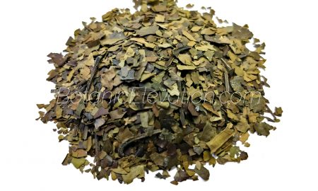 Ilex guayusa leaves