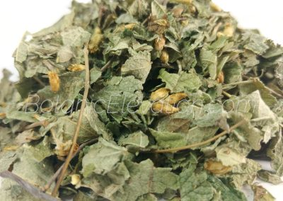 Calea Zechatechici Dream Herb 2