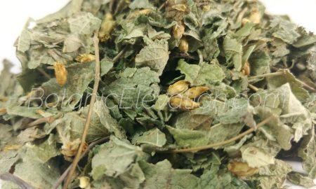 Calea Zechatechici Dream Herb 2