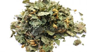 Calea Zecatechichi (Dream Herb) 1 BE