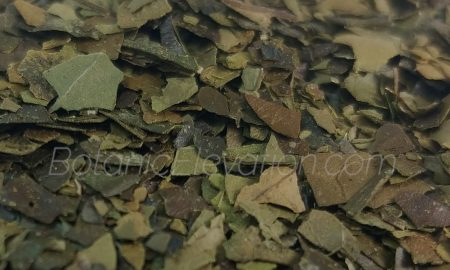 Guayusa Leaves Close-Up 3