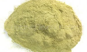 San Pedro (Huachuma) Powder 1