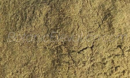 Sceletium Tortuosum (Kanna) 3 Close-Up