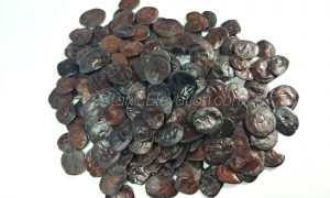 Yopo Seeds (Anadenanthera peregrina) 1