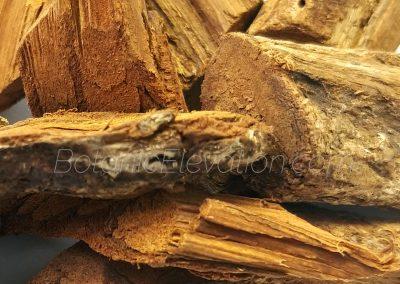Banisteriopsis Caapi Vine (whole) close-up 2